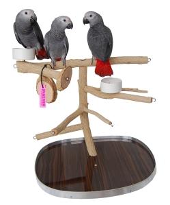 A bottlebrush tabletop gym for medium parrots
