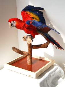 Parrots benefit greatly from small amounts of direct sunlight