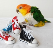 Foot toys can occupy birds when they're meeting for the first time