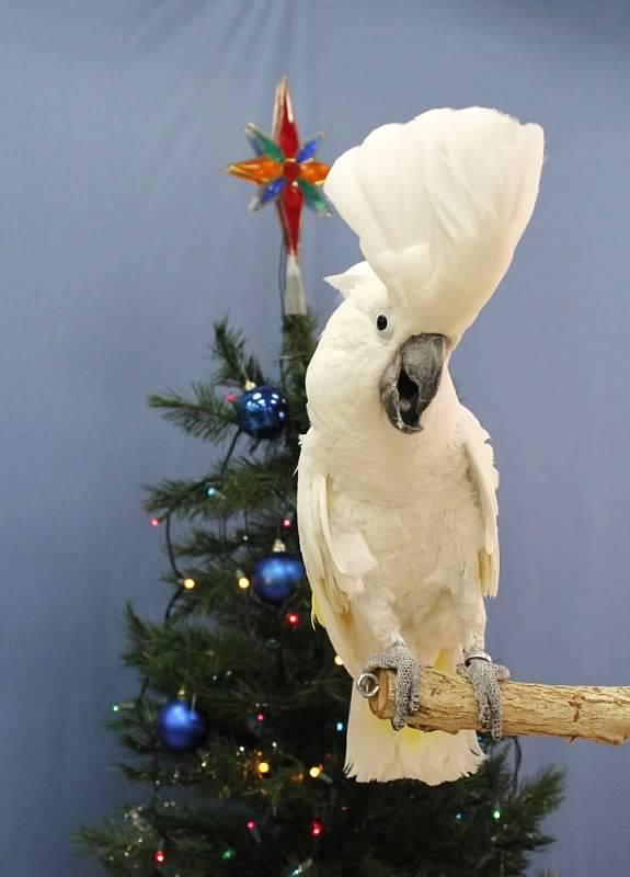 Professional Bird Grooming Golden Cockatoo Blog