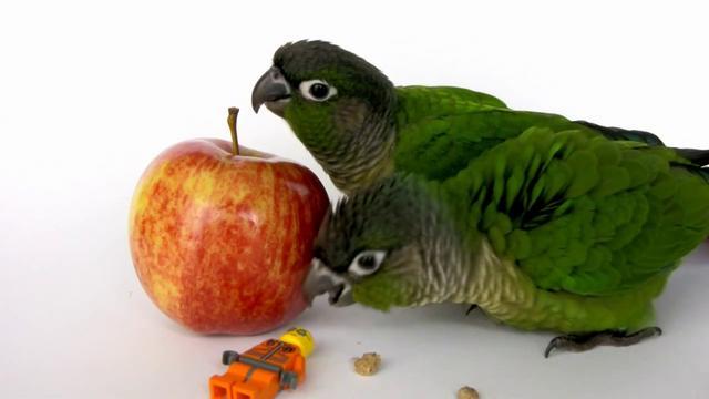 Senegal Parrot Foods Avoid